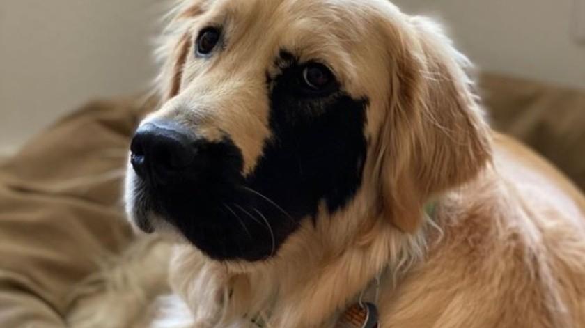 El perro que se volvió viral por una mutación genética(Instagram)