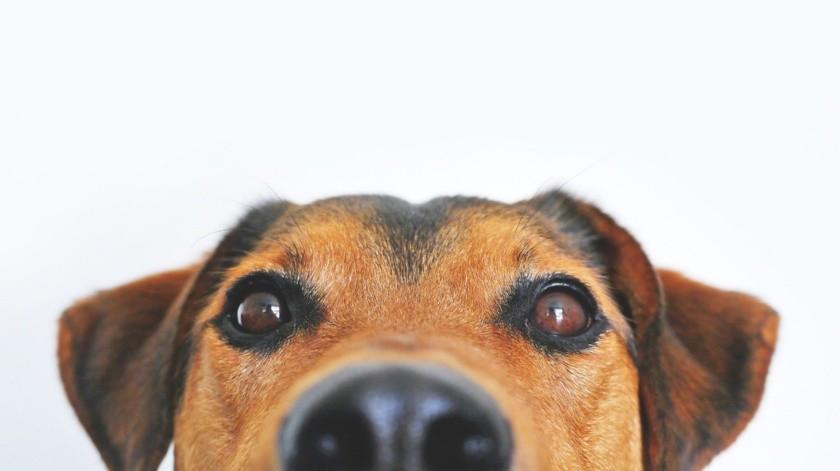 Además de cortes de colas y orejas, penalizan corte de cuerdas vocales, extirpación de uñas y dientes.(Pixabay)