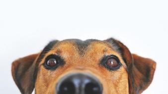 Además de cortes de colas y orejas, penalizan corte de cuerdas vocales, extirpación de uñas y dientes.