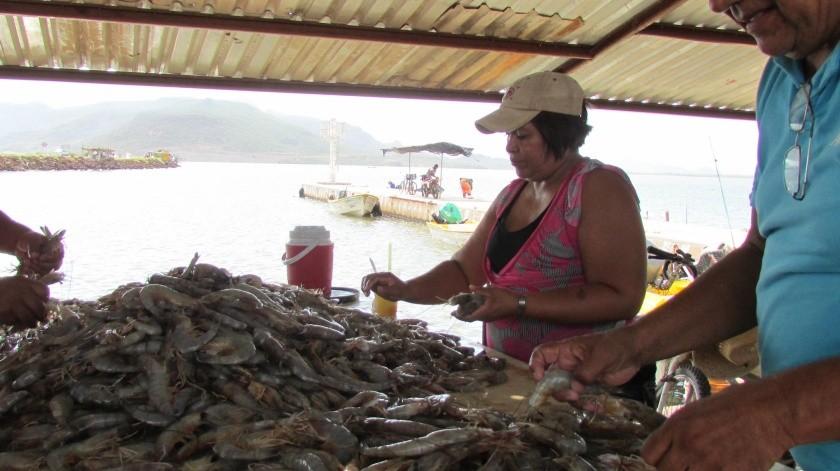 A ocho días de iniciada la actividad, los pescadores ribereños reportan pérdidas de 52 mil pesos(Archivo GH)