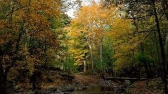 ¿Por qué en Sonora dicen que el otoño