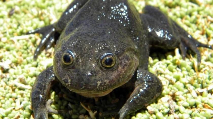Los expertos todavía deben hacer nuevos estudios para determinar la interrelación de la especie con su hábitat(REUTERS)