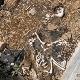 La violencia en Guanajuato aumentó al grado de torturar a animales domésticos. Una fosa con múltiples cadáveres y restos de diferentes perros fue hallada en la colonia Marfil