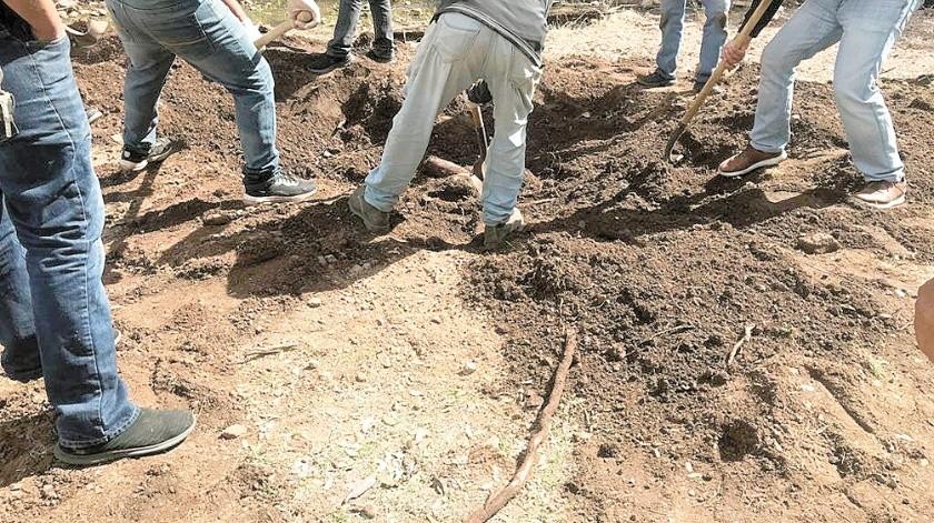 Hasta el momento han hallado en Sonora 199 restos humanos en fosas clandestinas.(Banco Digital)