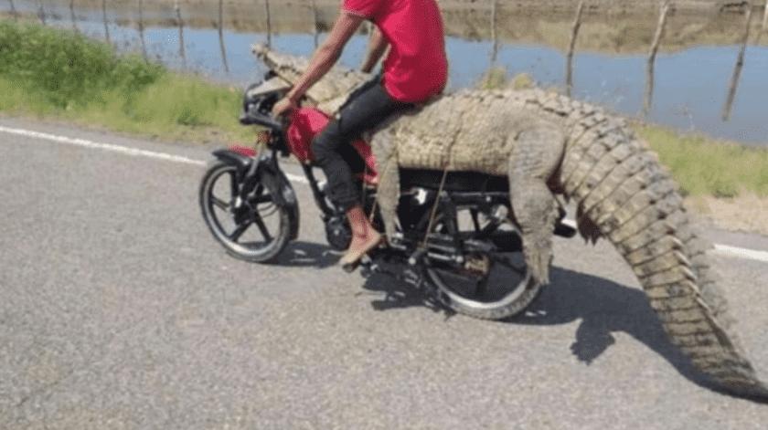 En las imágenes se observa que transportan al animal en una motocicleta(Captura de pantalla)