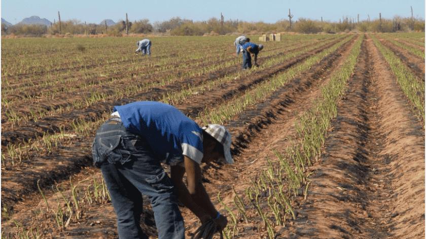 Sobre si el gobierno federal apoyará a los productores que se ven afectados por la sequía, Jiménez Cisneros aclaró que no se contempla.(Archivo GH)