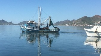 Los barcos saldrán el 29 de septiembre a pescar camarón a las costas de Sonora
