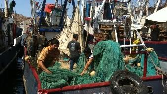 Las embarcaciones camaroneras mañana inician actividad en el Pacífico Mexicano