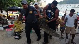 El cocodrilo fue localizado en una playa de Acapulco mientras paseaba entre los turistas