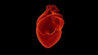 Este 29 de septiembre se celebra el Día Mundial del Corazón, para hacer conciencia sobre la importancia de cuidar este órgano