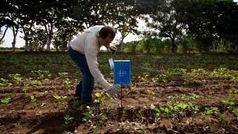 Aplica la Sader en Sonora campaña contra la mosca de la fruta