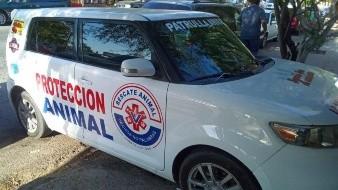 A partir del sábado patrullará por Hermosillo unidad de Protección Animal