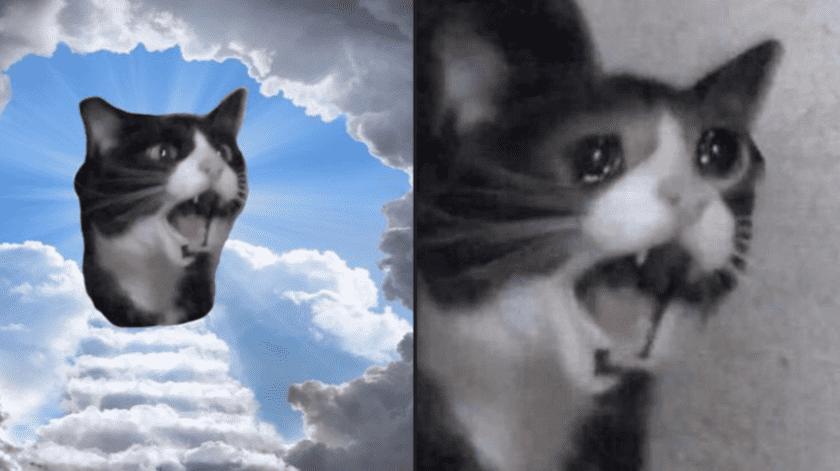 Fallece la 'gata que grita', un icono de los memes(Tomada de la red)
