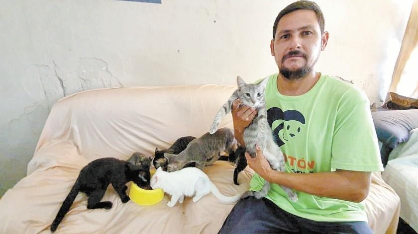 Hugo García cuida actualmente de 18 gatitos en su hogar.(Banco Digital)
