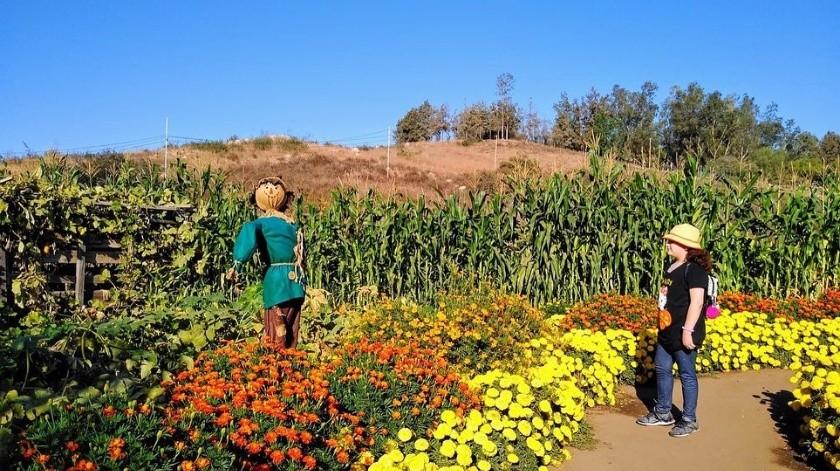 Este año la Ruta del Maíz celebra su quinto aniversario(Instragram La Ruta del Maiz)