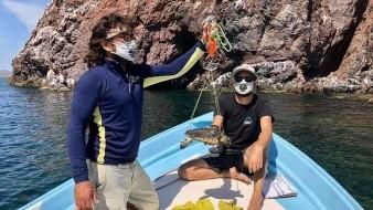 Barco camaronero entrega tortuga Carey y fue liberada por Grupo Tortuguero