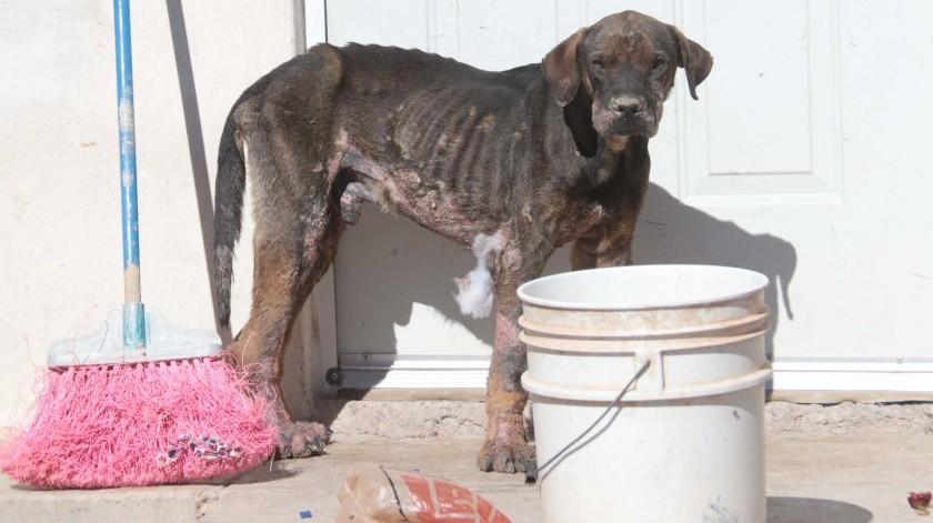 Foto ilustrativa. El animal fue encontrado en condiciones deplorables por los policías(Banco digital)