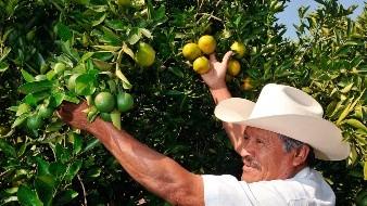 Capacitan a productores de cítricos del Valle de Mexicali