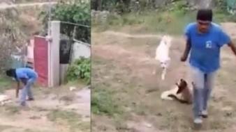 El hombre asesinó a una perra a machetazos