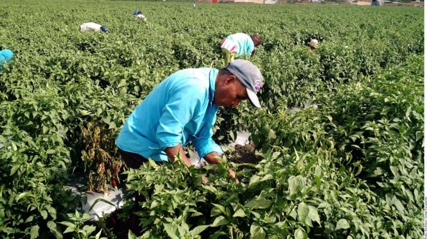 Economía de Sonora muestra signos de recuperación al generar empleo en septiembre(Banco Digital)