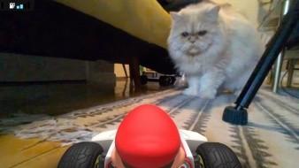 Los gatos están odiando Mario Kart Live: Home Circuit