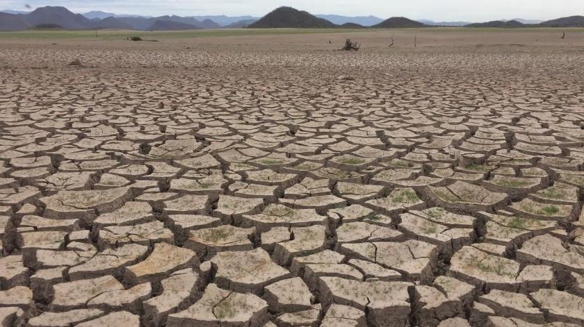 El sector ganadero pide con urgencia la declaratoria de emergencia por la sequía en Sonora.(Banco Digital)