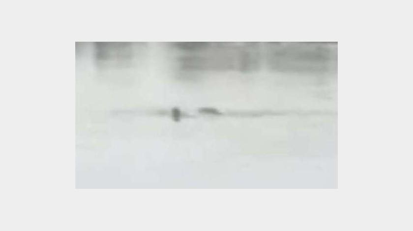 El hombre saltó a nadar a la laguna, una zona de cocodrilos(Especial)