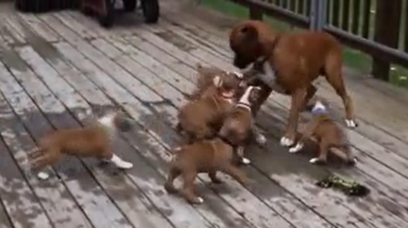 La invasión más tierna imposible de unos cachorritos
