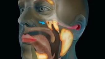Descubren órgano hasta ahora desconocido en parte central de la cabeza humana