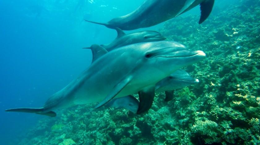 Por qué los delfines, los gatos y otros carnívoros no son capaces de sentir el sabor dulce(Pixabay)