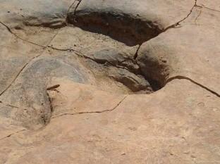 Hace 72 millones de años la región que hoy es Sonora tenía condiciones muy propicias para la vida de esos seres vivos.