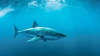 Pescador se encuentra con un tiburón blanco