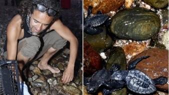 FOTOS: Tortugas liberadas al salir de huevo en playa de El Desemboque