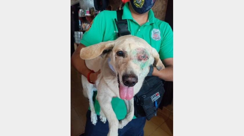 'Lupito' perdió un ojo tras ser atropellado.(Cortesía)