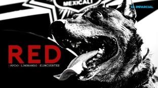 """El agente canino llegó a sus 10 años de edad con un historial íntegro de """"mordidas"""""""