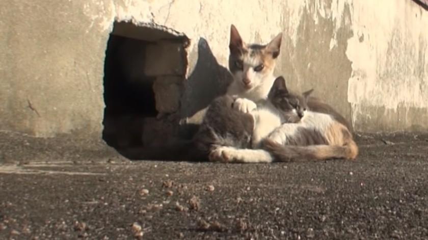 Gatita no abandona a su cría con discapacidad; se hace viral