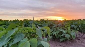 Austeridad de la 4T deja sin subsidio al sector agropecuario: AMIS