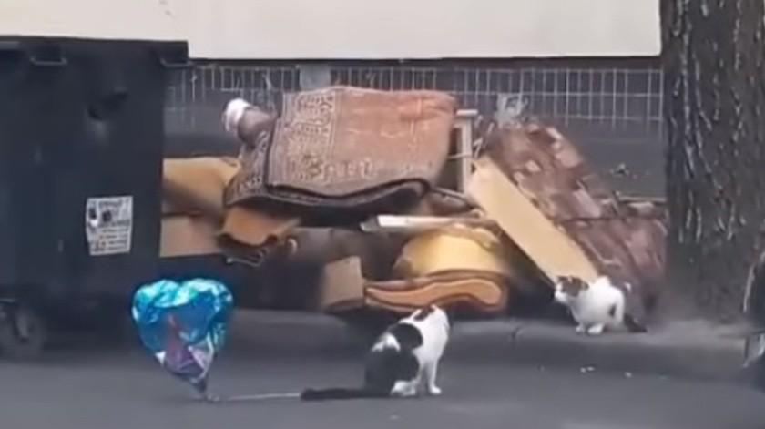 ¡Un romántico! Minino encuentra globo en la calle y se lo lleva a su 'pareja'
