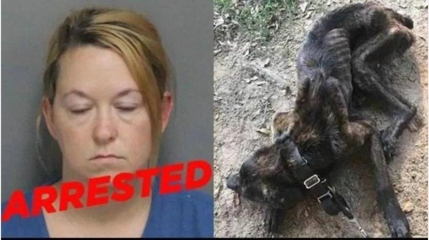 Champ: perrito se recupera de venganza de ex novia de su dueño(Especial)