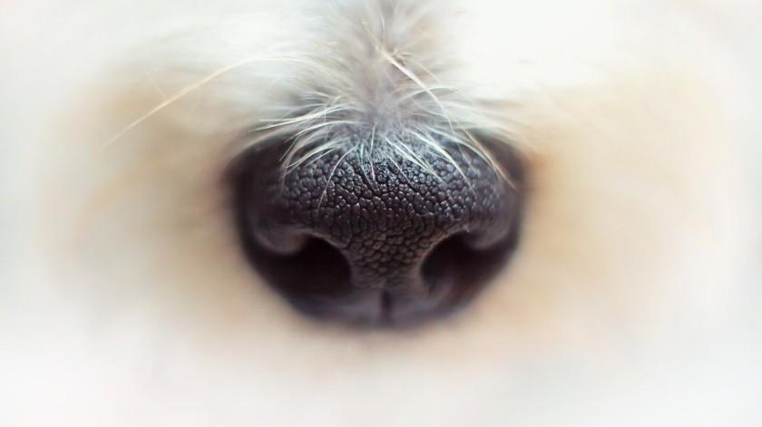 """El cachorro fue parte de una camada de cinco que nació en la isla mediterránea de Cerdeña. Lo bautizaron """"Pistacho"""" por su color."""