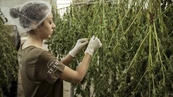 En su iniciativa, el legislador propone una nuevaLey General para el Control de Cannabis, así como reformas a la Ley General de Salud, el Código Penal Federal y la Ley del Impuesto Especial sobre Producción y Servicios.