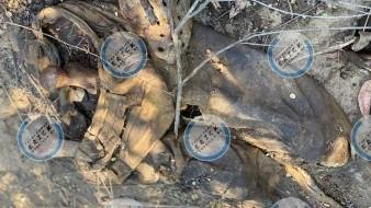 Encuentran cuerpo en Las Delicias