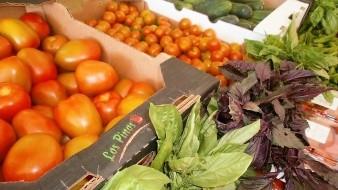 San Quintín, mayor productor de tomate de BC