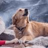 La verdad sobre la foto viral del perrito que busca a sus dueños entre escombros tras terremoto en Turquía