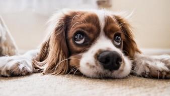 Un estudio de los patrones de ADN de los perros muestra que nuestro