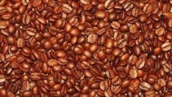 Encuentra los 6 bebés escondidos entre un centenar de granos de café