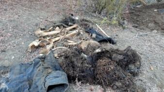 """""""Buscadoras"""" encuentran restos humanos en Tecate"""