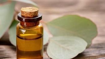 Utiliza el aceite esencial de eucalipto y vive un invierno de bienestar