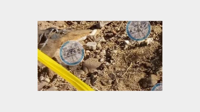 Encuentra colectivo dos cuerpos en colonia Alamar