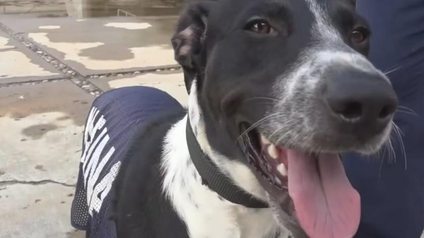 Rescatan a otro can de las inundaciones en Tabasco(Tomado de la red)